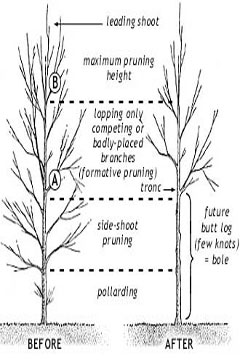 formative-pruning